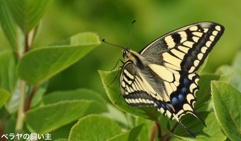 butterfly.jpg