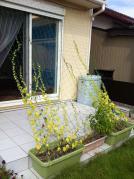 20120914_グリーンカーテン