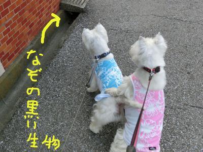 ichidoitatokonihayoru2.jpg