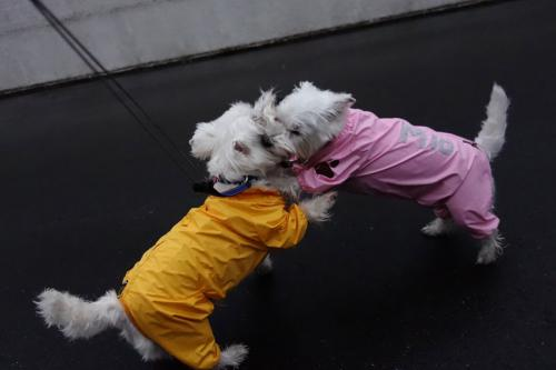 raincoatchakuyoukyohi1.jpg