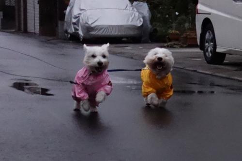 raincoatchakuyoukyohi3.jpg