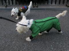 raindogguardnosippai1.jpg
