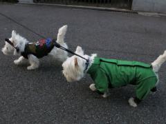 raindogguardnosippai3.jpg