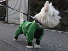 raindogguardnosippai4.jpg