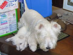 uchinoko2kagetunohibi1.jpg