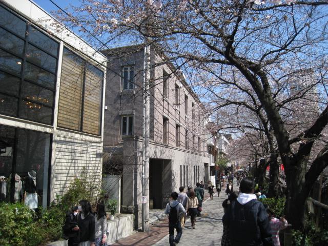 目黒川桜 011