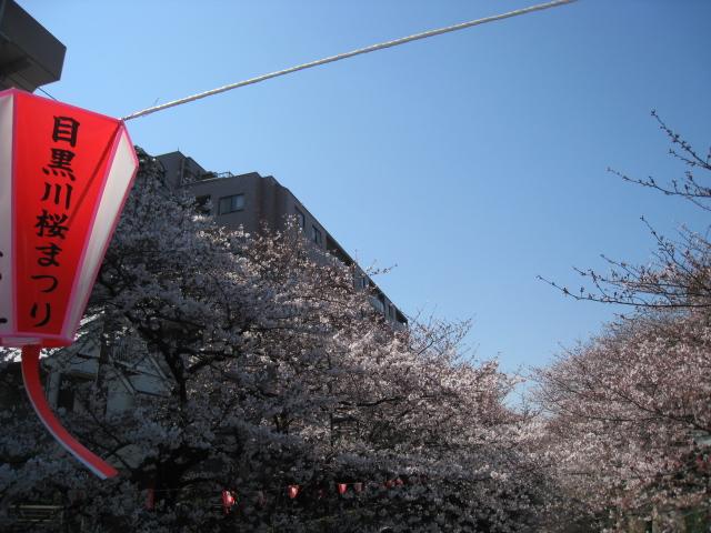 目黒川桜 010
