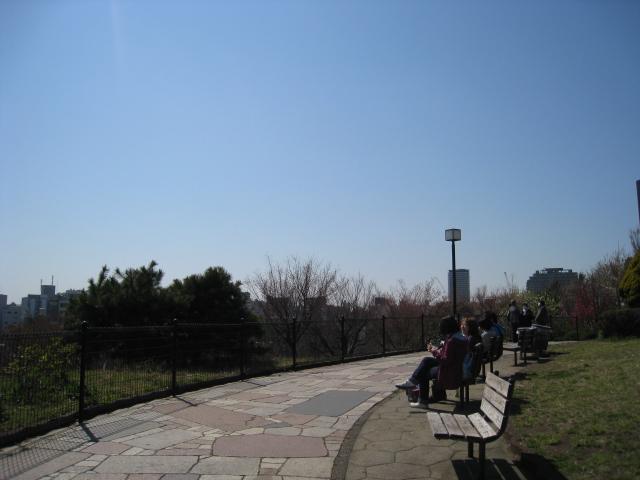 目黒川桜 015
