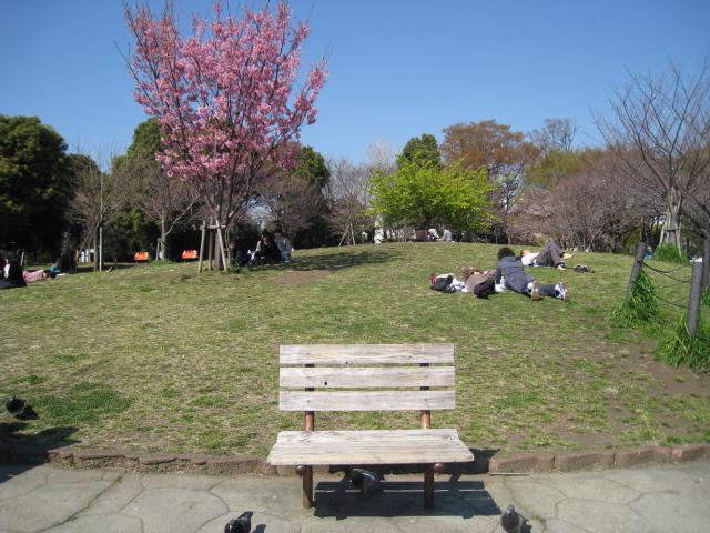 目黒川桜 023