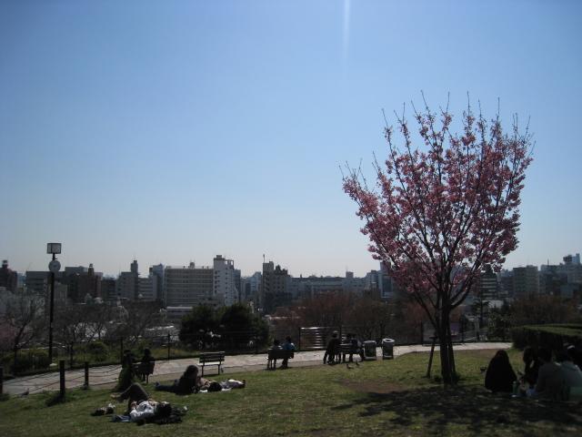 目黒川桜 022
