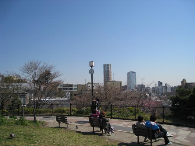 目黒川桜 019