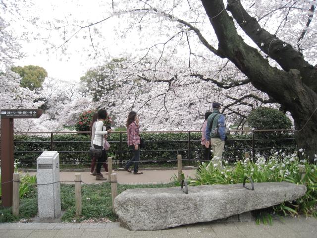 千鳥ヶ淵緑道 006