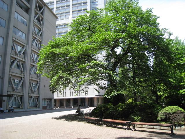 青山学院大学 015