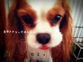 image_20121223125726.jpg