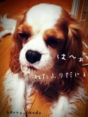 image_20130131100653.jpg