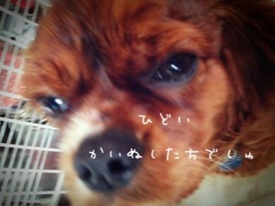 image_20130207160340.jpg