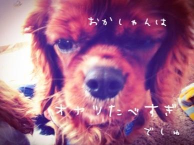 image_20130208184746.jpg