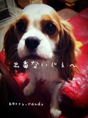 image_20130212113212.jpg