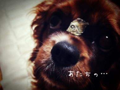 image_20130217183219.jpg