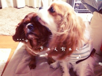 image_20130301204158.jpg