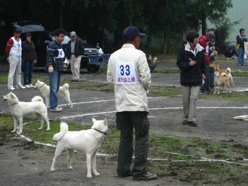 道犬展覧会2