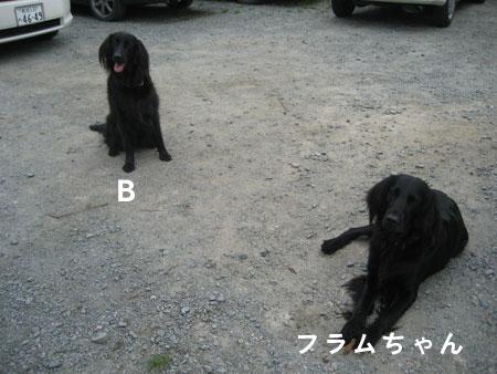 b33102.jpg
