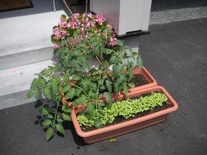 家庭菜園画像 443
