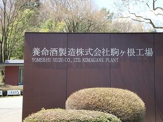 youmeishu-1