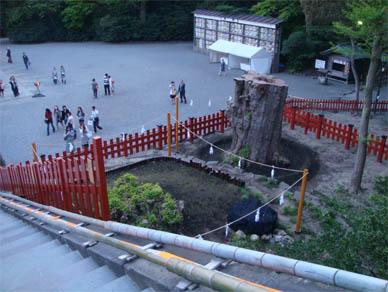 May1,2010tsuru2