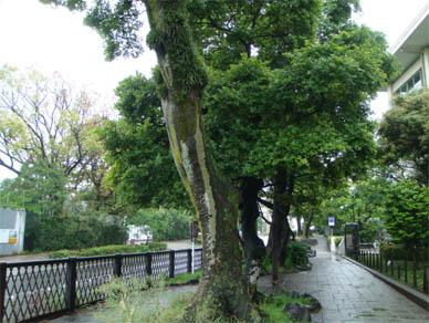 May23,2010shimashima1
