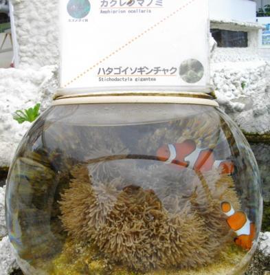 2012沖縄69