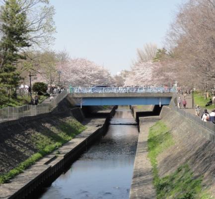 2012桜3