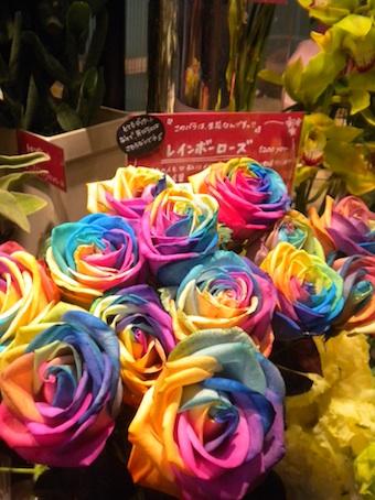 20100525 rainbowrose