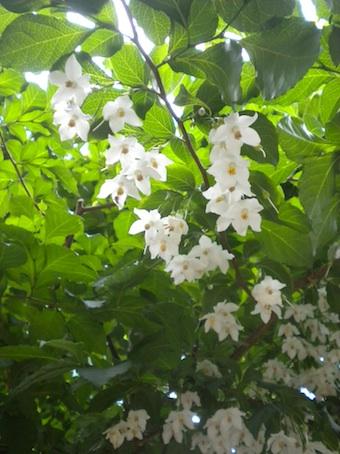 20100510 flower1