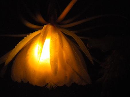 F_Flower_4.jpg