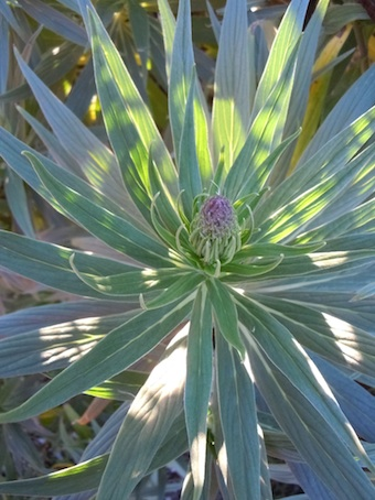 plants_1.jpg