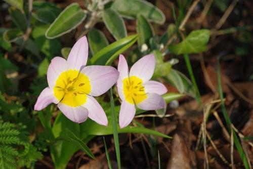 14月の花