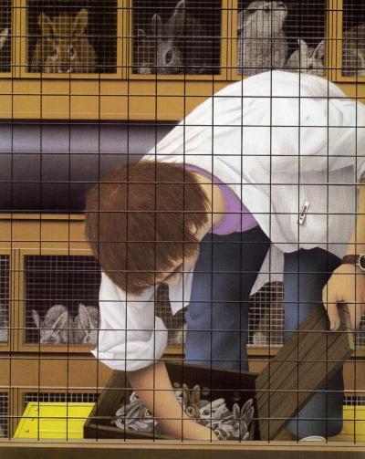 Lile aux lapins 6
