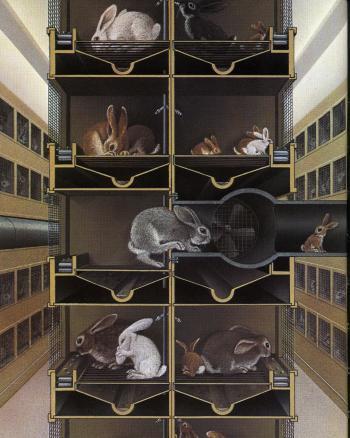 Lile aux lapins 12