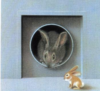 Lile aux lapins 14