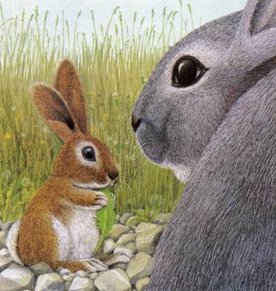 Lile aux lapins 22