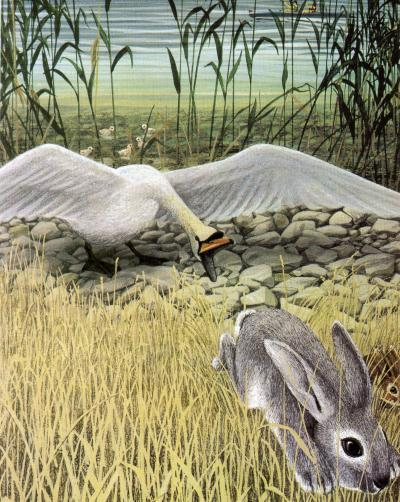 Lile aux lapins 23