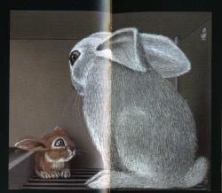 Lile aux lapins 8-2