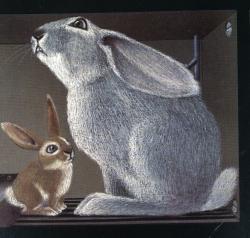Lile aux lapins 9-1