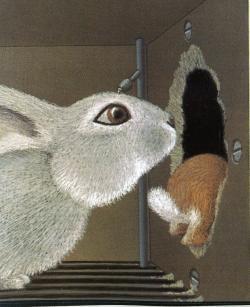 Lile aux lapins 11-1