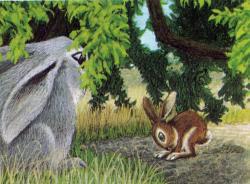 Lile aux lapins 25-3
