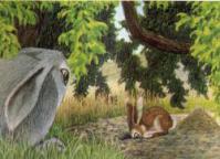 Lile aux lapins 26-1