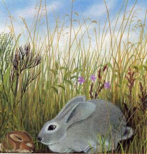 Lile aux lapins 31