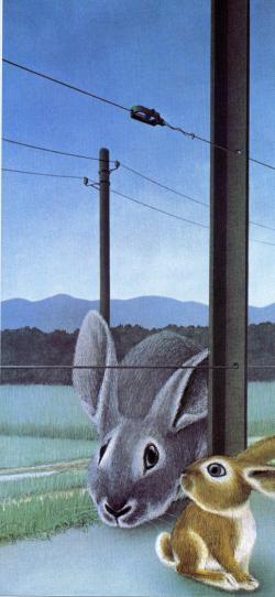 Lile aux lapins 35