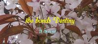 the bonds Destiny BANNER_02